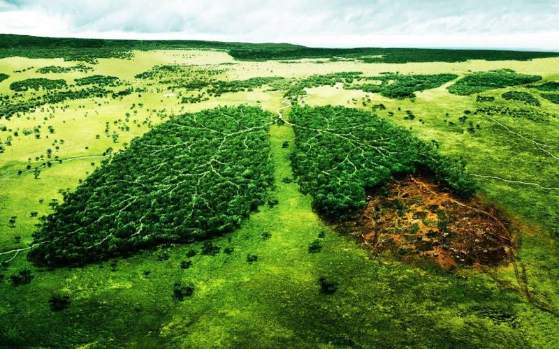 deforestation-impact-environnement-tabac