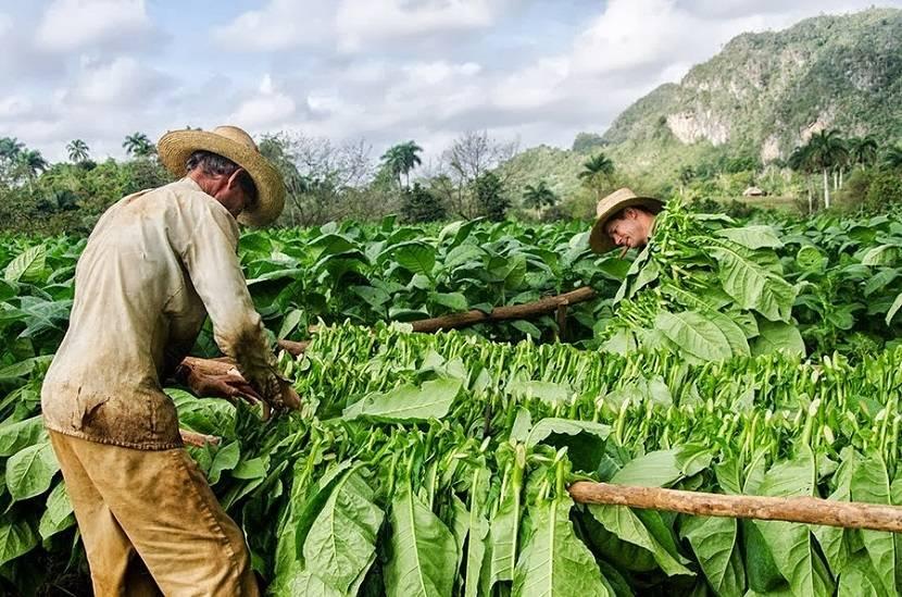 tabac-obstacle-developpement-facteur-pauvreté