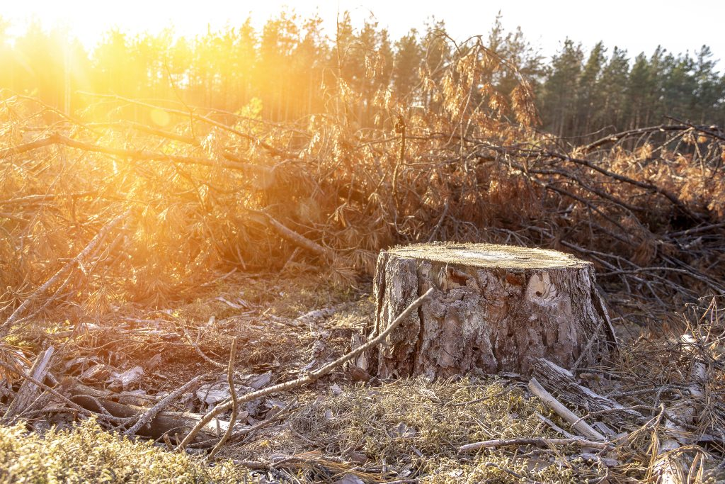 destruction-ecosysteme-culture-tabac