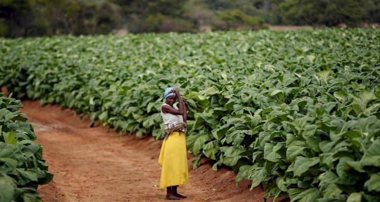 afrique-eldorado-tabac